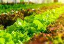 Diplomado Universitario en Calidad y Responsabilidad en el Agro